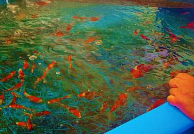 Photograph - Koi Buying Trip 10 by Phyllis Spoor