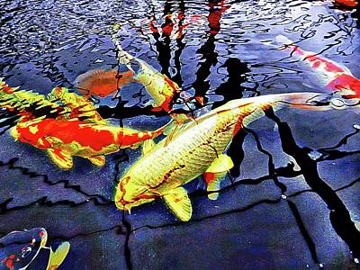 Photograph - Koi Carp Huddle by Dorothy Berry-Lound