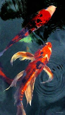 Digital Art - Koi by Chuck Mountain