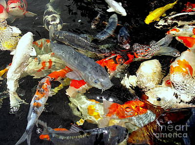 Photograph - Koi Fish Frenzy by Ed Weidman