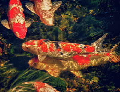 Photograph - Koi Fish Fresco Two by Tony Grider