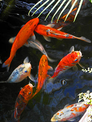 Photograph - Koi Fish II by Elizabeth Hoskinson