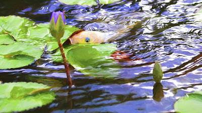 Butterfly Koi Photograph - Koi Impression by Carol R Montoya