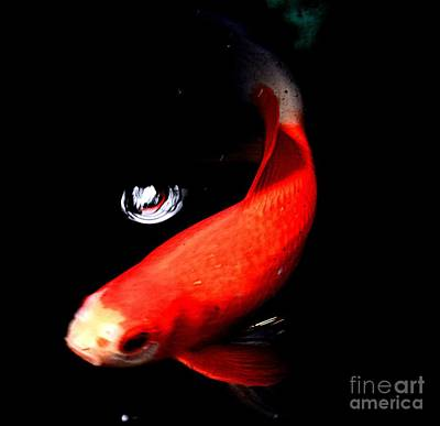 Photograph - Koi by Janice Spivey