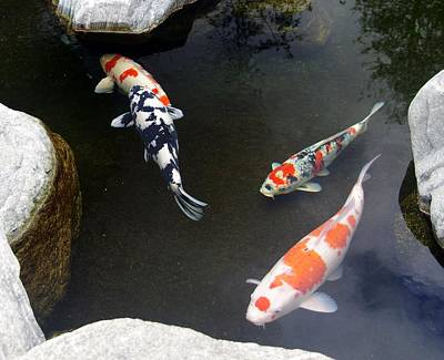 Photograph - Koi-jfg Cherry Blossom Festival 2013-2 by Phyllis Spoor