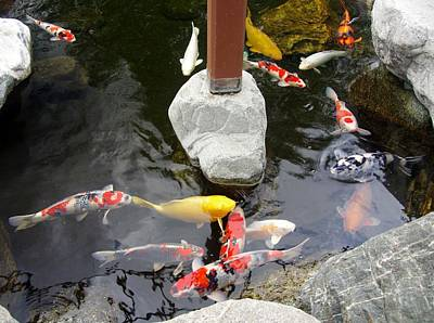 Photograph - Koi-jfg Cherry Blossom Festival 2013-5 by Phyllis Spoor