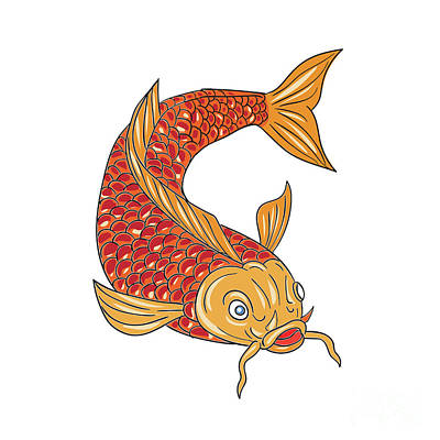 Koi Digital Art - Koi Nishikigoi Carp Fish Swimming Down Drawing by Aloysius Patrimonio