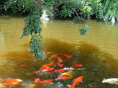 Photograph - Koi Party by Karen Zuk Rosenblatt