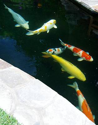 Photograph - Koi by Phyllis Spoor