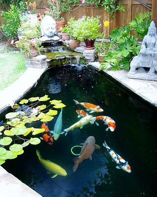Photograph - Koi Pond 2014 by Phyllis Spoor