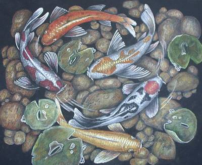 Lilly Pond Drawing - Koi Pond 3 by Kat Ewing