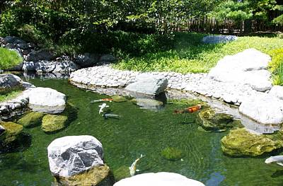 Photograph - Koi Pond 6 Japanese Friendship Garden by Phyllis Spoor