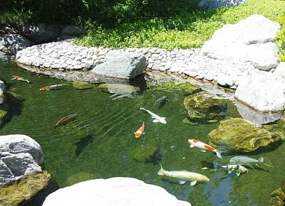 Photograph - Koi Pond 8 Japanese Friendship Garden by Phyllis Spoor