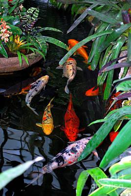 Goldfish Photograph - Koi Pond by Nancy Mueller