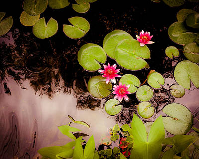 Photograph - Koi Pond With Water Lilies by Heidi Hermes