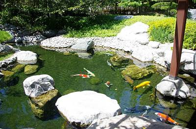 Photograph - Koi Pond10 Japanese Friendship Garden by Phyllis Spoor
