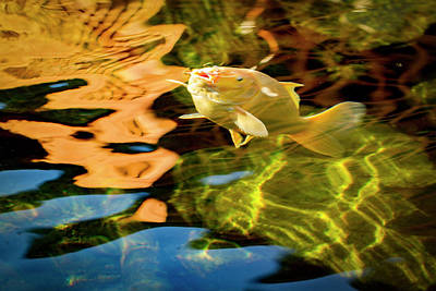 Photograph - Koi Reflection by Jean Noren