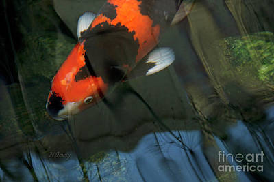 Photograph - Koi Reflection by Natalie Dowty