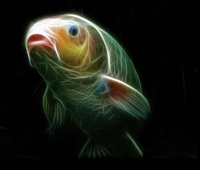 Koi Digital Art - Koi by Tilly Williams