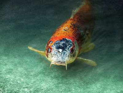 Photograph - Koi by Wim Lanclus