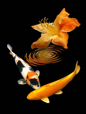 Photograph - Koi With Azalea Ripples Vertical by Gill Billington