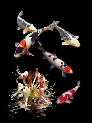 Photograph - Koi With Honeysuckle Reflections Vertical by Gill Billington