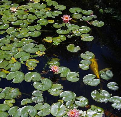 Photograph - Koi With Lily Pads E by Phyllis Spoor