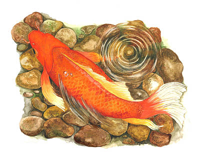 Painting - Koi With Ripple by Cindy Hitchcock