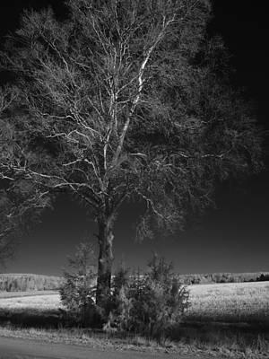 Photograph - Koivu by Jouko Lehto