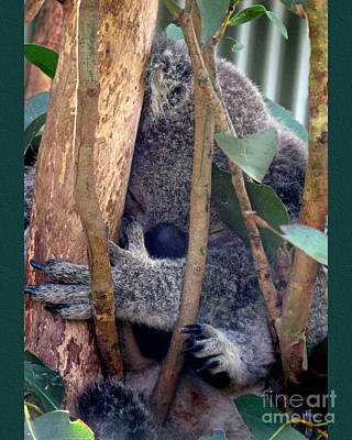 Koala Bear Digital Art - Koko by Carolyn  Wright