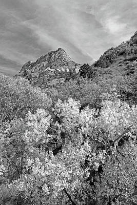 White Photograph - Kolob Canyon No. 63-2 by Sandy Taylor