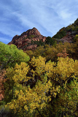 Photograph - Kolob Canyon No. 63 by Sandy Taylor