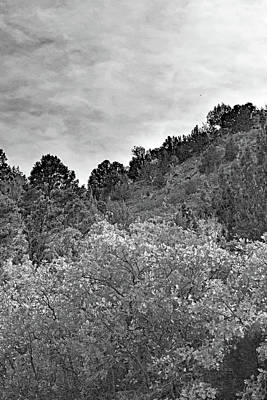 Photograph - Kolob Canyon Trees No. 1-1 by Sandy Taylor
