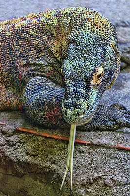 Photograph - Komodo Dragon # 2 by Allen Beatty