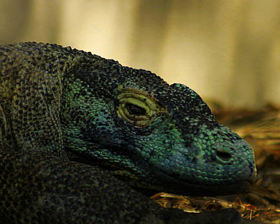 Photograph - Komodo Dragon by Anthony Jones