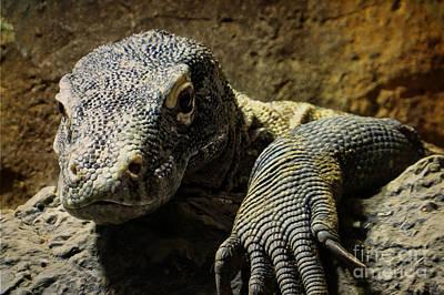 Photograph - Komodo Dragon by Dawn Gari