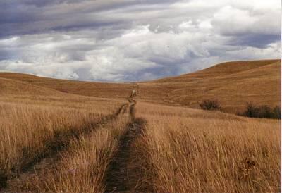 Konza Prairie Photograph - Konza Trail by Jared May