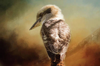 Photograph - Kookaburra by Michele Wright