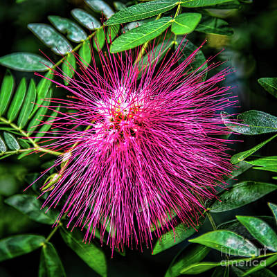 Photograph - Koosh Ball by Jon Burch Photography