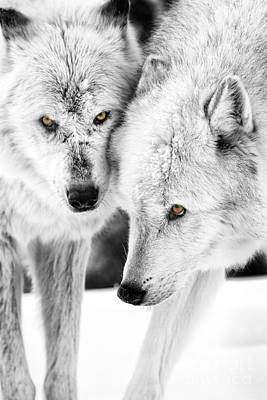 Photograph - Kootenai And Akela by Sonya Lang