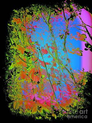 Photograph - Korean Akebia Quinata by Nancy Kane Chapman