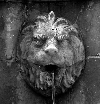 Koreshans Lion Art Print by David Lee Thompson