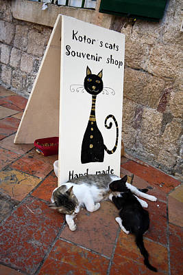 Photograph - Kotor Cats by Sally Weigand