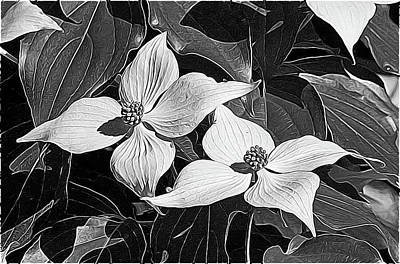 Photograph - Kousa Dogwood by Betsy Zimmerli