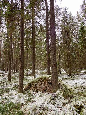 Photograph - Kovero Forests by Jouko Lehto