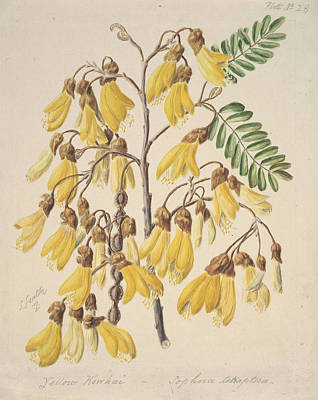 River Painting - Kowhai, New Zealand, By Sarah Featon by Artistic Rifki