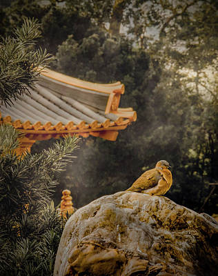 Photograph - Kowloon - Bird And Stone by Mark Forte