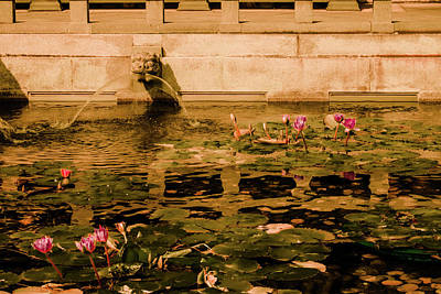 Photograph - Kowloon - Lily Pool by Mark Forte