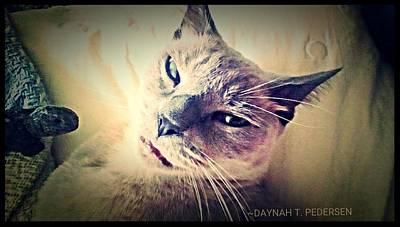 Kitty Photograph - Kremlin The Cat by Dana Pedersen