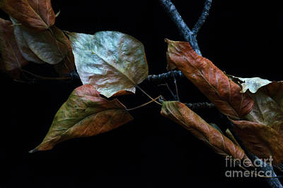 Photograph - Crinkled Leaves 1 by Bob Christopher